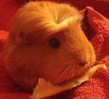 Brenda the Guinea Pig by guineapiglove