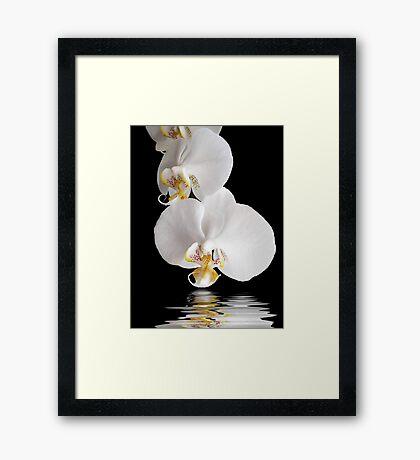 Exotic Cascade Framed Print