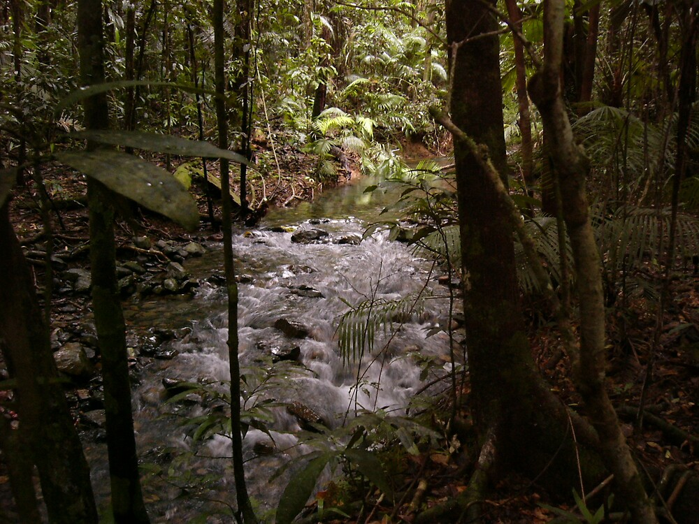Rainforest Stream by Adelia