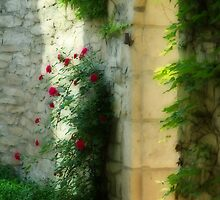 Gatekeeper - Roses by ajnphotography