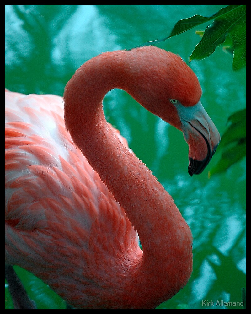 Unframed Flamingo by Kirk Allemand