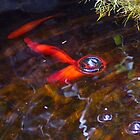 Koi Incidence 002 by Cardet