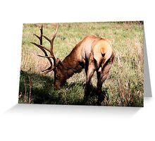Royal Bull Elk II Greeting Card