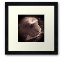 Brenda the Guinea Pig (Old Style) Framed Print