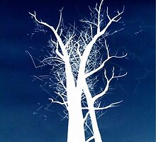 Inverted Trees by Nicoletta37