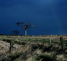 The Rihanna Tree  by Wrayzo