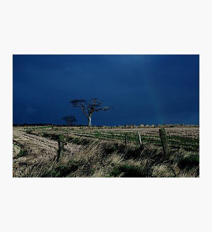 Rihanna Tree, County Down Photographic Print