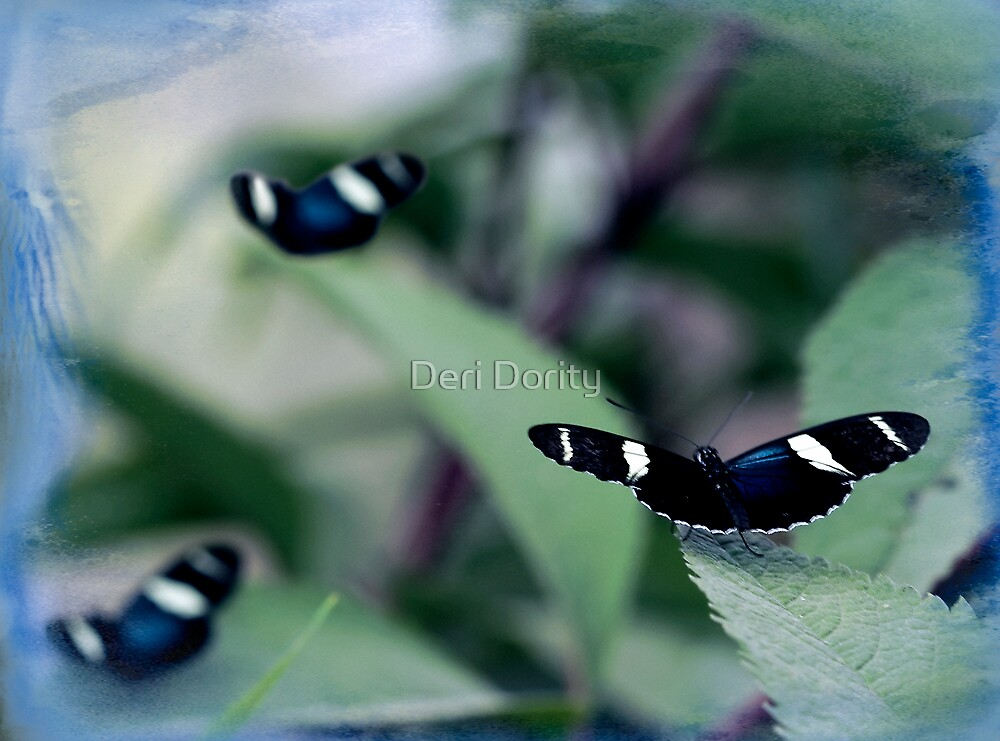 The butterflys by Deri Dority
