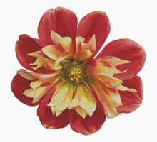 Dahlia red-yellow (I) Kids Clothes