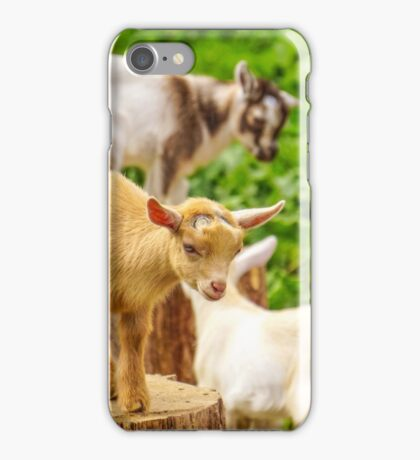 Baby Goats Playing iPhone Case/Skin