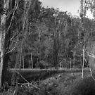 Old Hops Field, Tasmania by Brett Rogers