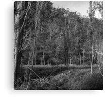 Old Hops Field, Tasmania Canvas Print