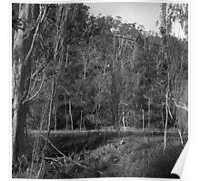Old Hops Field, Tasmania Poster