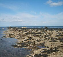 Rockpools at the beach by Tanya Housham