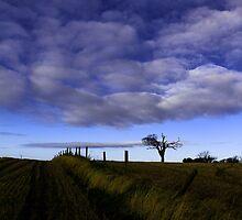 The Rihanna Tree, The Blues! by Wrayzo