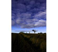 Rihanna Tree, The Blues! Photographic Print