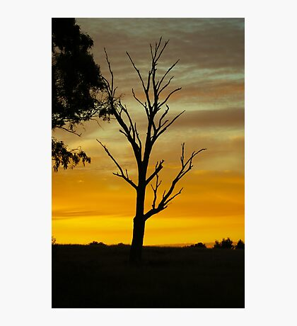 Dead Tree Sunset Photographic Print