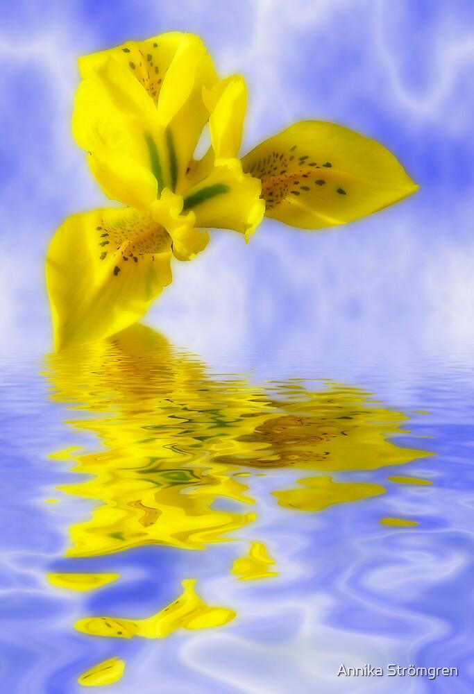 Floating Iris by Annika Strömgren