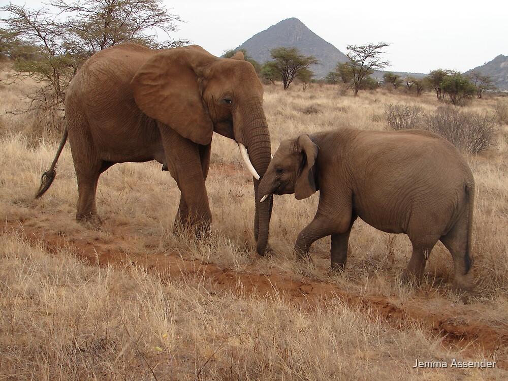 Elephants, Samburu, Kenya by Jemma Assender