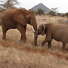 Elephants, Samburu, Kenya by Jemma Assender