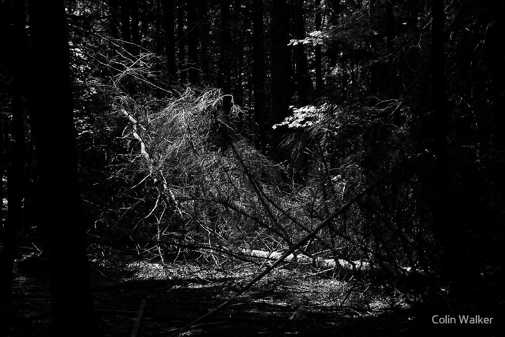 Tree Web by Colin Walker