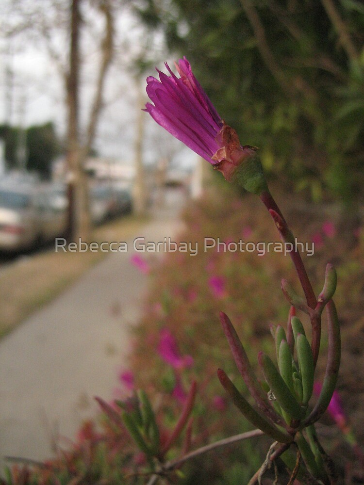 purple flower in space by Rebecca Garibay Photography