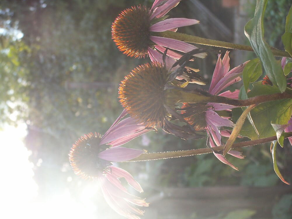 streaky light flowers by 0Clare0