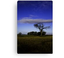 The Rihanna Tree, With The Blues! Canvas Print
