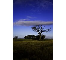 Rihanna Tree, With The Blues! Photographic Print