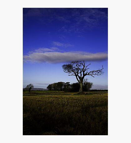 Rihanna Tree, With The Blues! Photographic Print