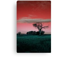 The Rihanna Tree, Really Wild! Canvas Print