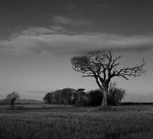 The Rihanna Tree, Monochrome! by Wrayzo