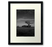 The Rihanna Tree, Monochrome! Framed Print