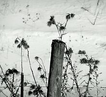 Posted Weeds by WildThingPhotos