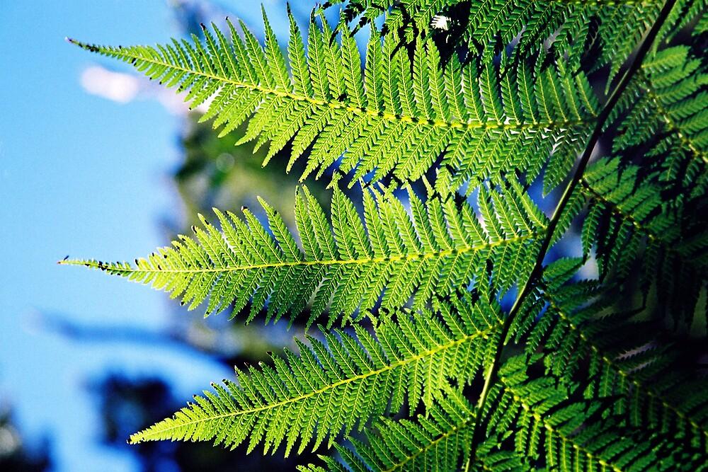 Fern Leaves by bethgardner