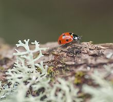Ladybird with Lichen by Jemma Stovell