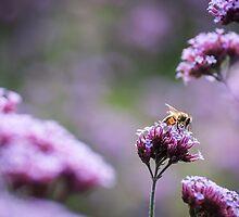 Honey Bee by Jemma Stovell