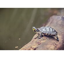 Dutch Turtle Photographic Print
