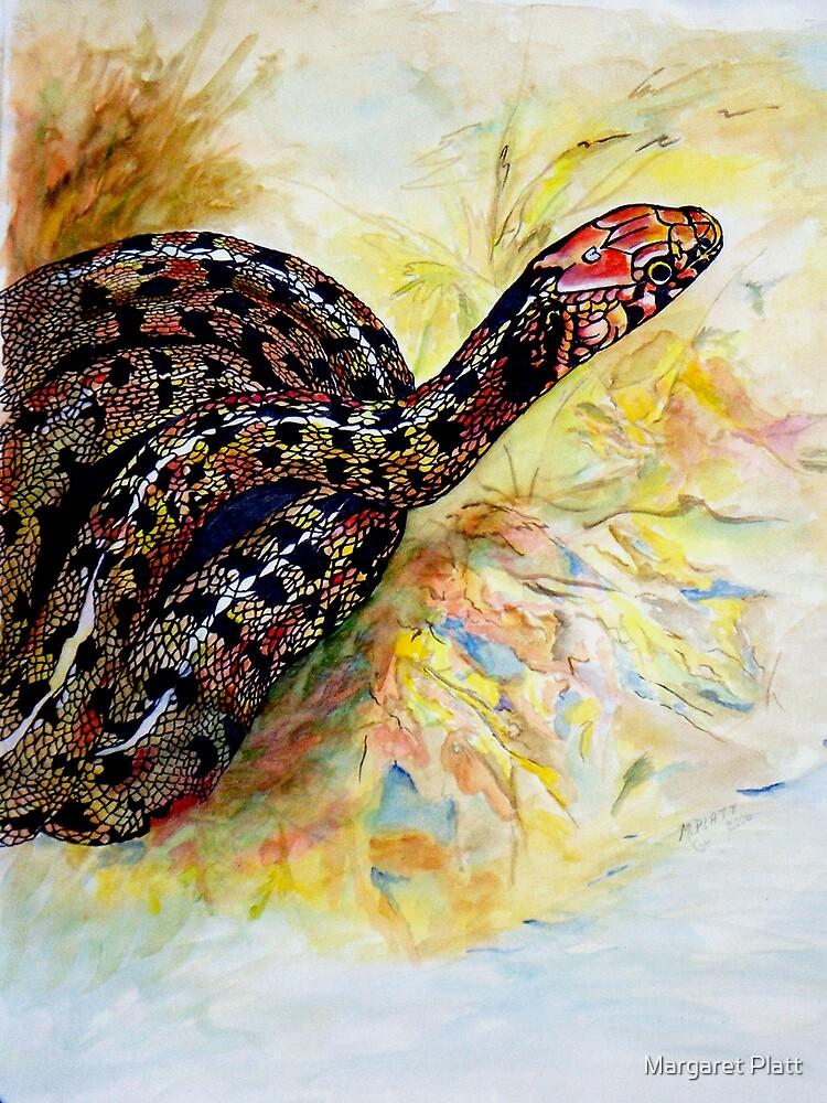 Corn Snake by Margaret Platt