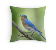 Male Eastern Bluebird Throw Pillow
