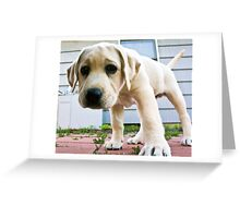 Curious lil Riley Greeting Card