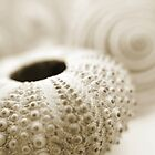 Seashells by focusonu