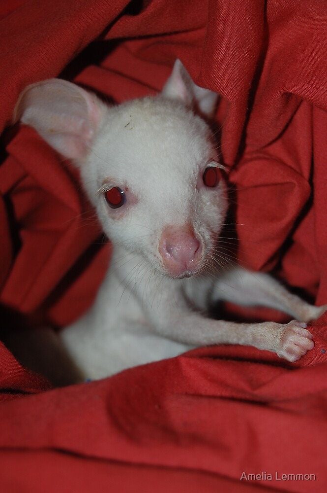 albino tamar wallaby by Amelia Lemmon