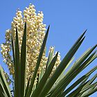 Yucca Plant by Kathleen Brant
