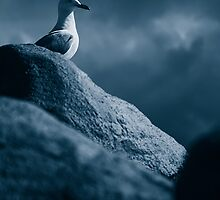 Lonely Gull by shadows