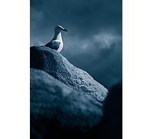 Lonely Gull Photographic Print