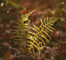 Autumn Understory by Bethany Helzer
