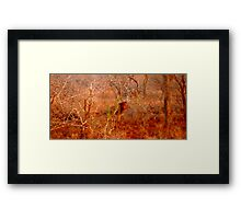 The Witch in the Wardrobe Framed Print
