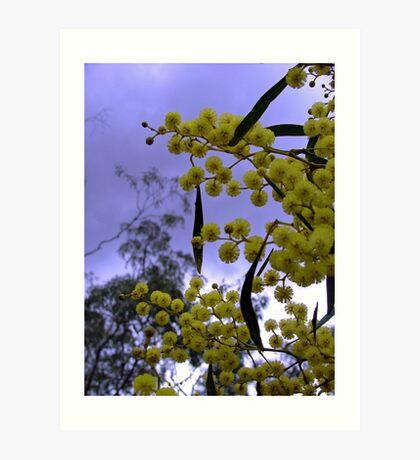 Wattle is Australia Art Print