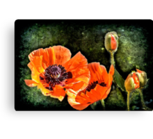 Oriental Poppies family Canvas Print